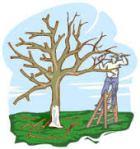 tree-trim