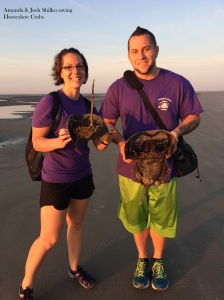 shilkos saving horseshoe crabs 5-17