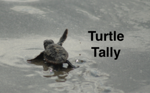 Turtle wave tally