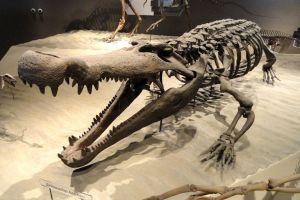 ancientalligator-2