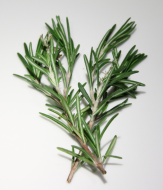 Rosemary branch July 2018