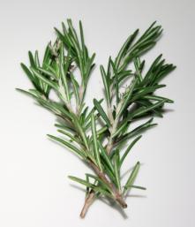 Rosemary branch July 2018