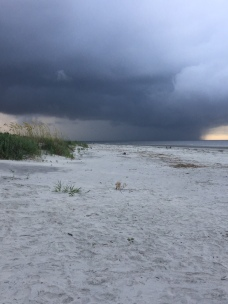 Turtle storm 1 in am July 19 2018
