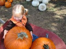 Legare Farms pumpkinpatch Nov 2018