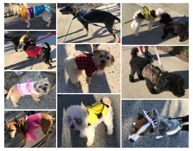 Pet Parade Oct 2018
