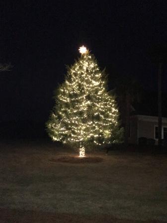 Tree Lighting 5 Nov 2018