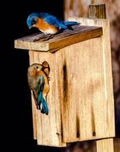 bluebird2 Oct 2019