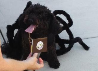 Halloween Pet Parade winner Oct 2019