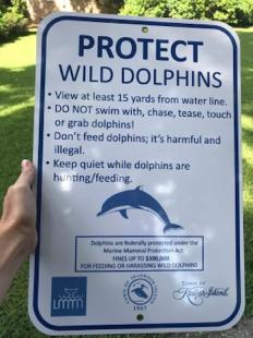 Dolphins Nov 2019