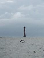 Morris Island and bird
