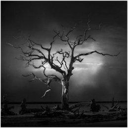 Photo Club Kevin Holliday Tree Image Jan 2020