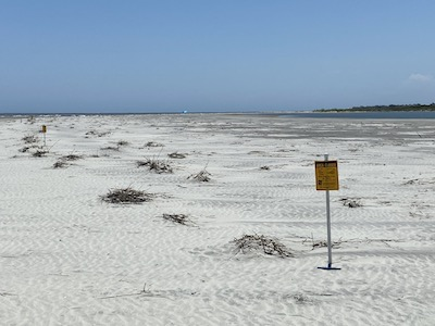 Least Tern nests June 2020