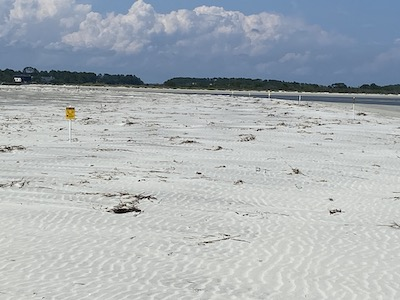 Least Tern beach June 2020