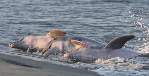 Dolphin Education Program Aug 2020
