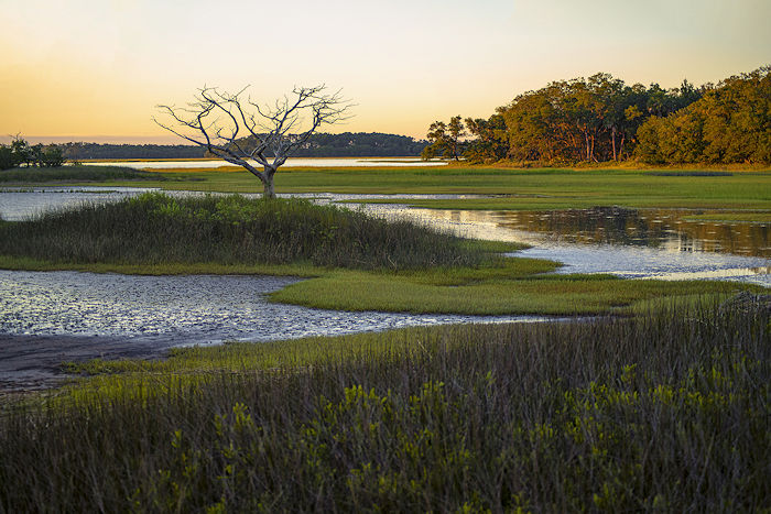 """Receding Tide,"" Pinkney Island National Wildlife Refuge by Blake Womick 